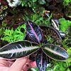 sale of rare plant