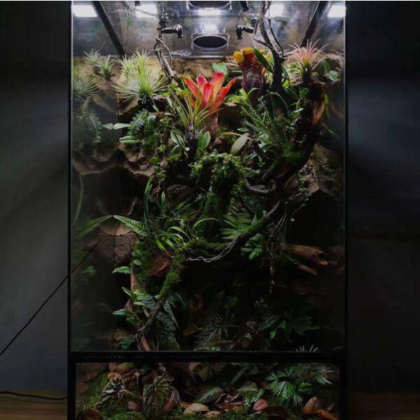 Rainforest Terrarium Kit