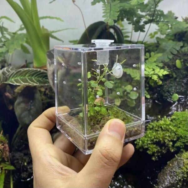 Insect & Reptile Mini Enclosure Cage Terrarium