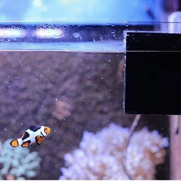 Automatic Brine Shrimp Hatchery Box For Saltwater Tank