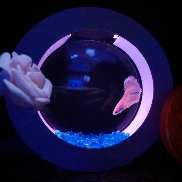 Mini Desktop Aquarium Fish With Water Filtration LED(Betta Fish Tank)