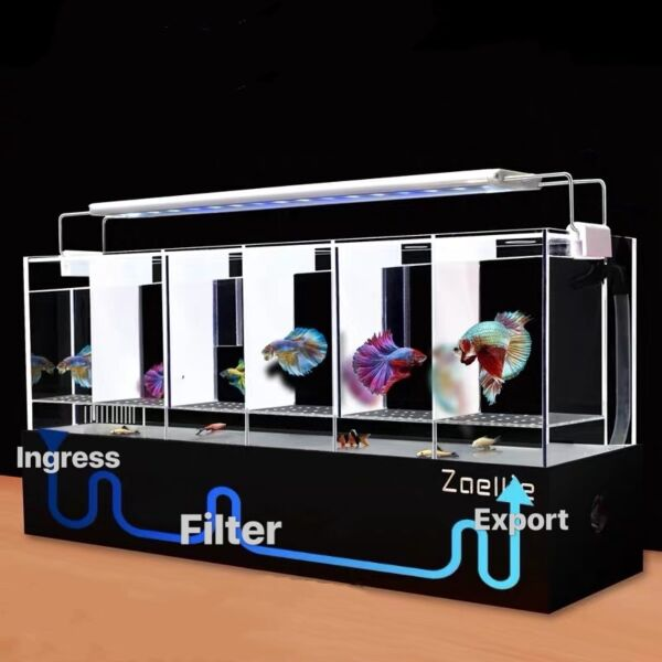 Betta Fish Multiple Tanks With Filtration