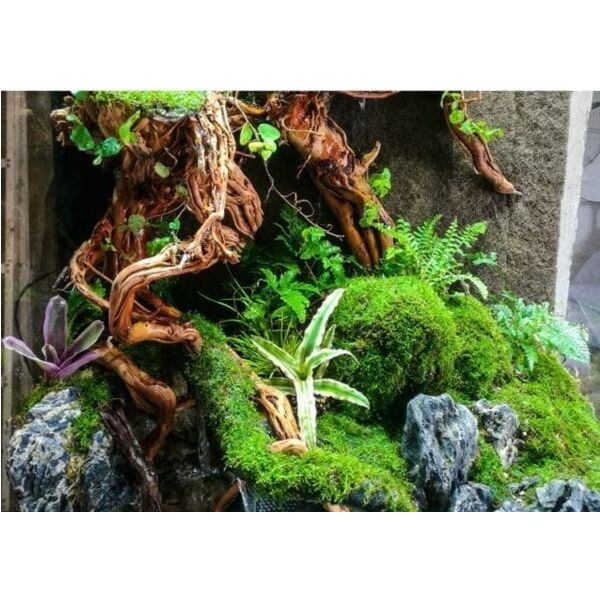 Aquarium Plant Freshwater Fish Tank – Ecological Plant Fiber Cotton