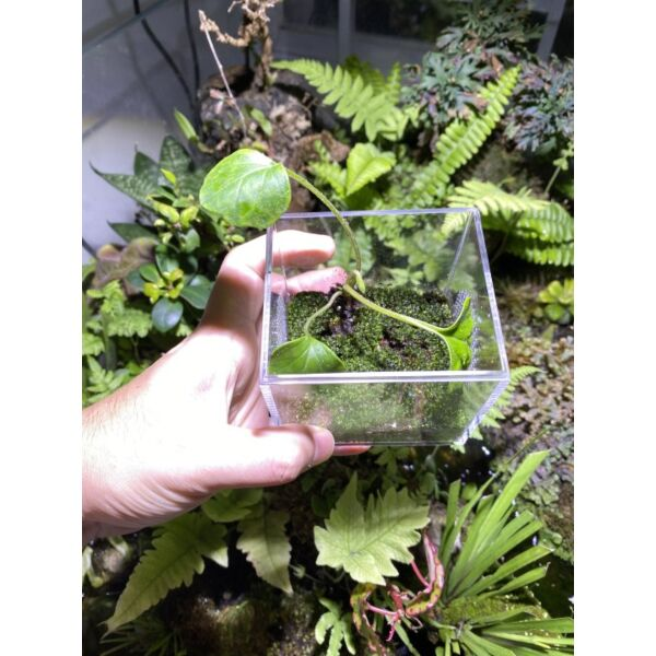 Jumping Spider  Mantis Mini Enclosure Cage Terrarium