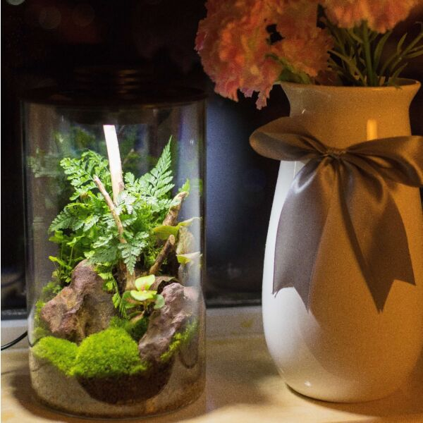 Cylindrical Micro Landscape Terrarium with LED Grow Light