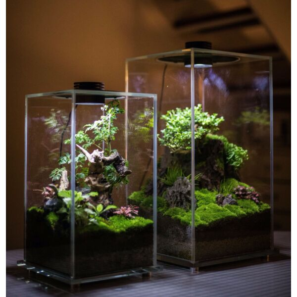 Cubic Micro Landscape Terrarium with LED Grow Light