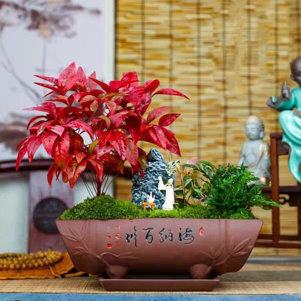Heavenly Bamboo ( Nandina domestica ' Firepower ' )
