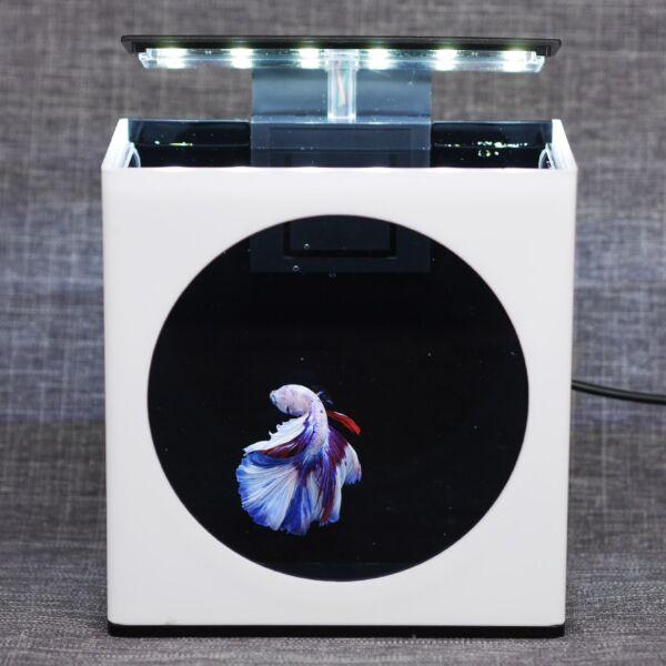 Desktop betta fish tank