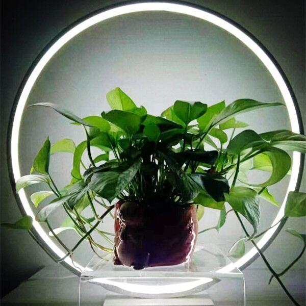 Warm White LED Display Lamp